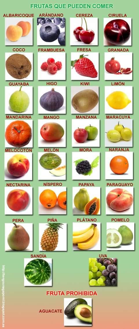 Frutas que pueden comer los Loros